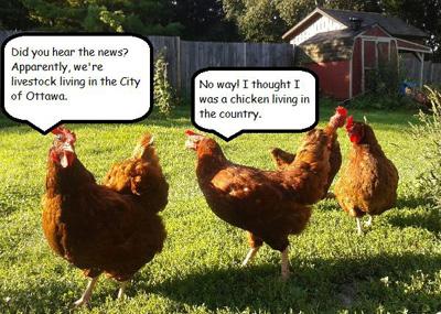 Ottawa Chickens